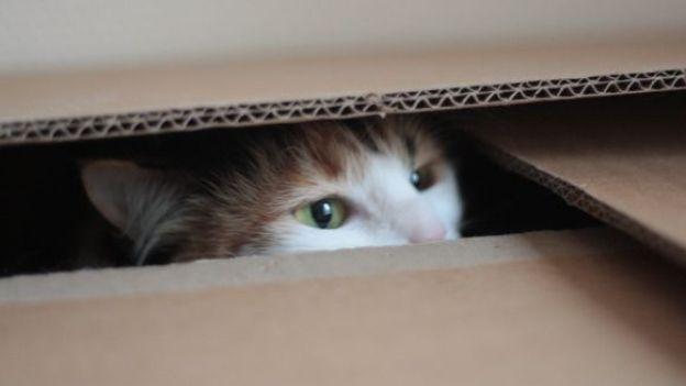 Traslocare se si hanno animali in casa come farlo senza stress